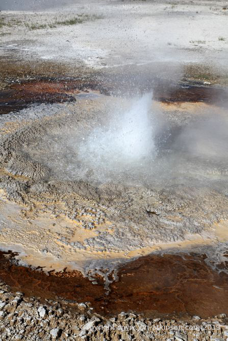 Anemone Geyser, Yellowstone National Park