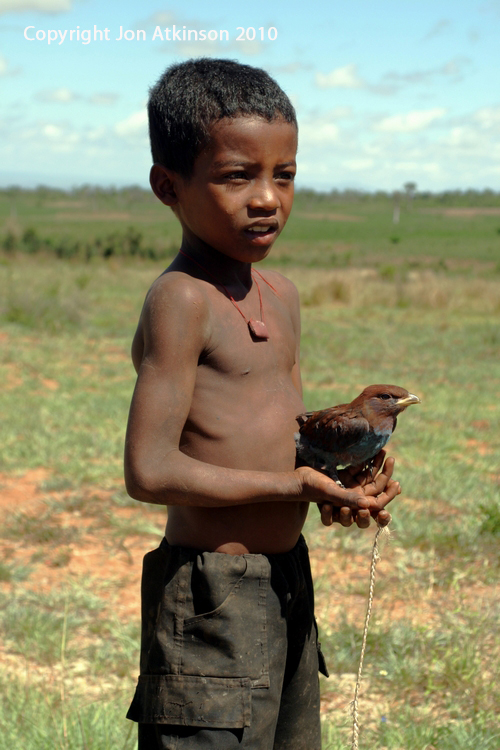 Madagascan boy with 'Pet' Lilac-breasted Roller