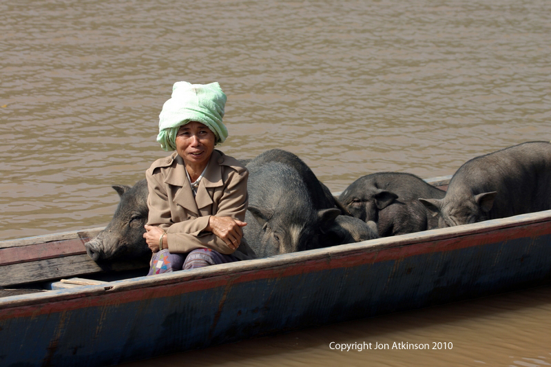 Transporting Pigs along the Mekong River, Laos