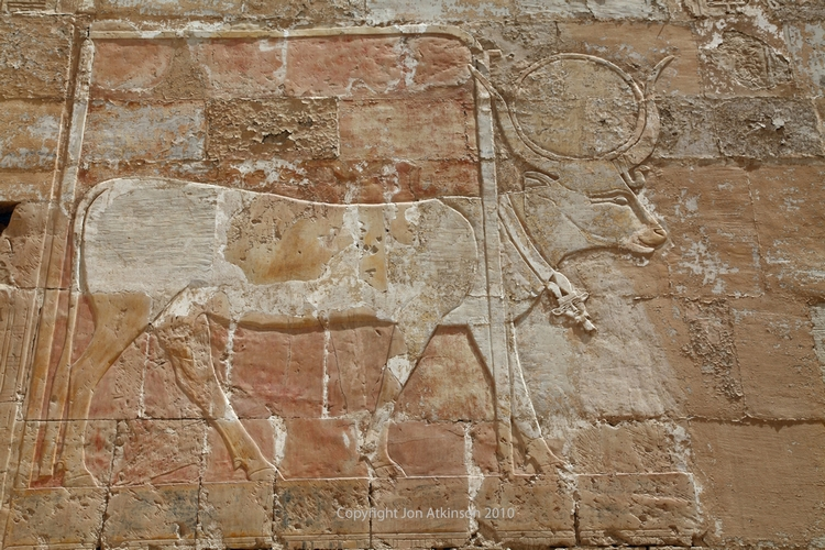 Wall relief showing Hathor as a cow
