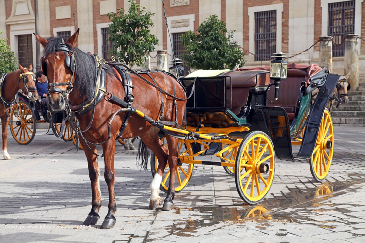 Sevilla Horse and Carriage